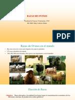 Razas de ovinos 2019 [Autoguardado]