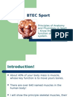 BTEC Sport - Anatomy - Muscle Groups