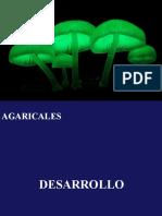 agaricales imp.pdf