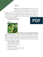 ORZ - Tratamente, informatii