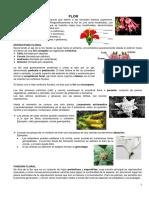 Flor.pdf