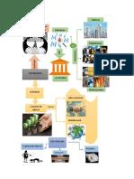 infograma de las 12 tareas politica monetaria