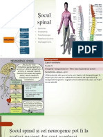 Socul Spinal