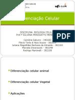 Diferenciação Celular - Apresentação - final2