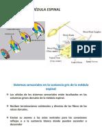FISIOLOGIA CELULAR (1)