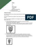 CLASIFICACION DE  TREPANOS  parte 1