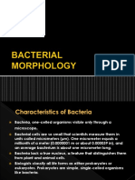 BACTERIAL MORPHOLOGY in Microbiology