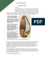 Plan de mejoramiento SENA práctica 2020.docx
