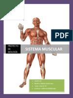 componentes de los músculos