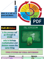 cell-cycledivision