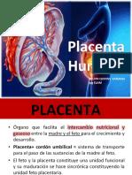placenta-anto-160519072248