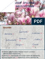 Floarea.pptx