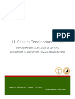 Canales Tendinomusculares