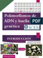 Sesion 13 -Huella genetica (3)