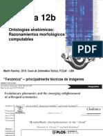 Teo 12b Ontologias anatomicas