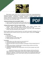 5 Cara Perkembangbiakan Vegetatif Buatan pada Tumbuhan