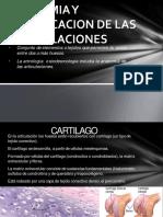 anatomiayclasificaciondelasarticulaciones-130225203653-phpapp01-convertido.pptx