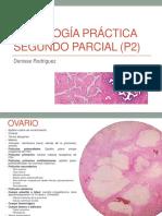 Histología-B práctica IIP p2