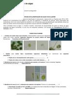 Projeto Animálculo - Chave de classificação de algas