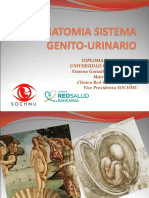 ANATOMIA SISTEMA GENITO-URINARIO