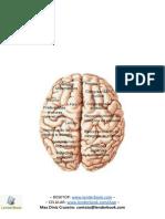 Conceitos Fundamentais de Neurociências.docx