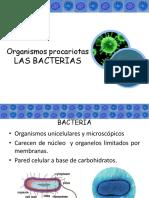5.-cel-procariotas-bacterias-Julian.plus