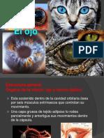 El ojo2019 (1)(1)