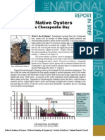 Non-Native Oysters in the Chesapeake Bay, Report in Brief