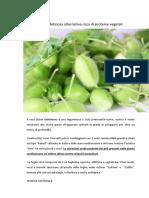 tecniche colturali del cece in agricoltura biologica