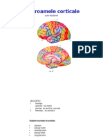 Text Sindroamele corticale.pdf