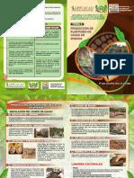 2-Producción-de-Plantones-de-cacao-en-Vivero