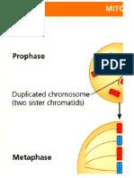 tarp comparison of meiosis