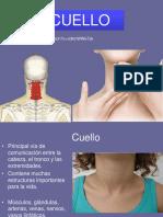 clase- musculos del cuello