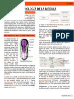 Embriología de La Medula