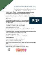 RESUMEN EXPOSICIÓN TRONCO ENCEFALICO.docx