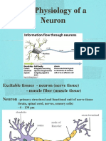 3. NEURON ACTION POTENTIAL - PPT - Ready.pptx
