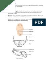 Bones of the Upper Limb and Torso