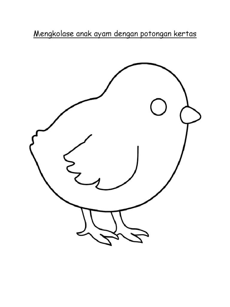 13 Mewarnai Gambar Ayam Menetas Terbaru Lingkar Png