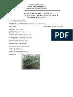 PLANTAS MEDICINALES Y ALIMENTICIAS JEREMIAS