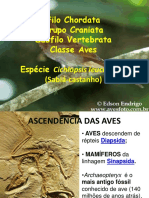 Classe Aves.ppt
