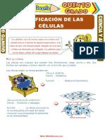 Clasificación-de-las-Células-para-Quinto-Grado-de-Primaria