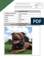 CARACTERISTICAS DE CANINOS - ANIMALES DE COMÑAIA.docx