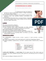 ANATOMOFISIOLOGIA DA LARINGE