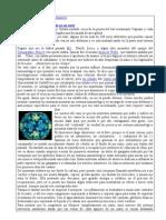 CCNN-Un Rhino Virus Se Ha Instalado en Mi Nariz