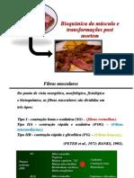 Bioquímica do músculo e transformações post mortem