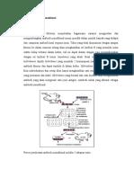 Antibodi Monoklonal edit(1)