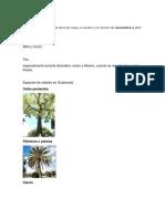 Clima en Guatemala.docx