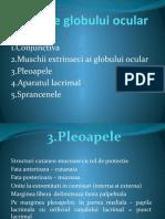 Anatomia globului si anexelor; Refractia - unic.pptx
