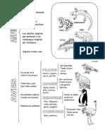Animales Segun Su Estructura
