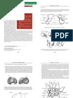 Anatomía del escafoides